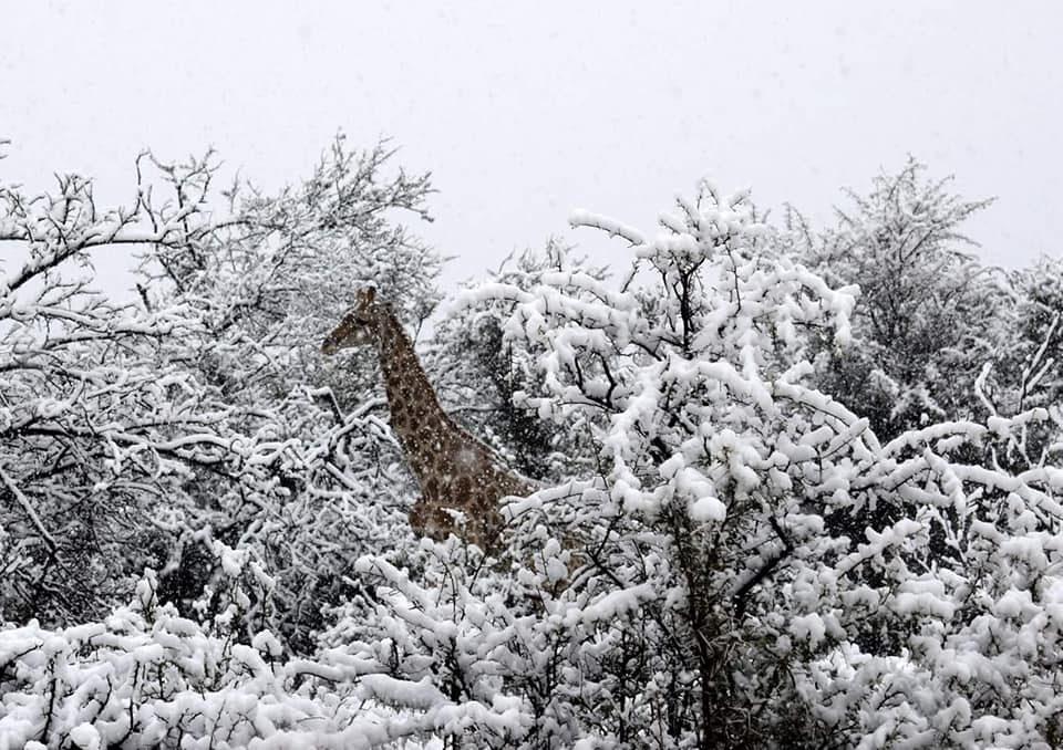 Havazott Dél-Afrikában