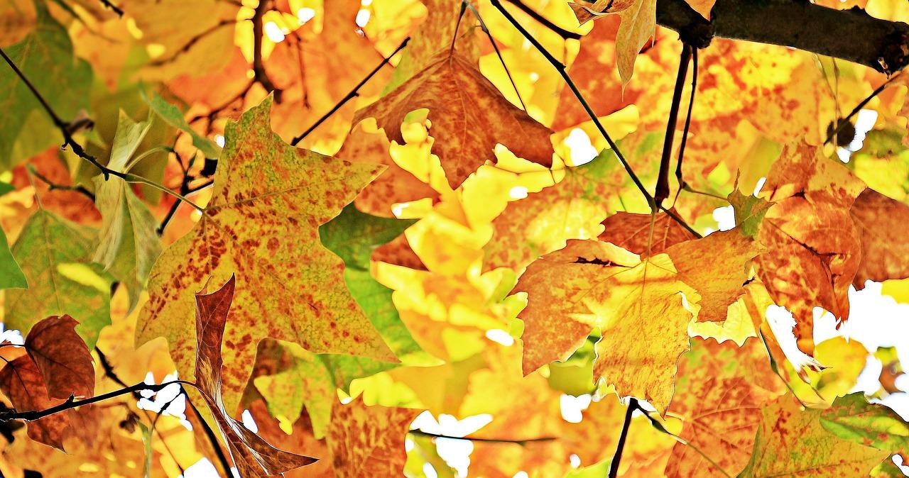 Csillagászati értelemben is megkezdődött az ősz