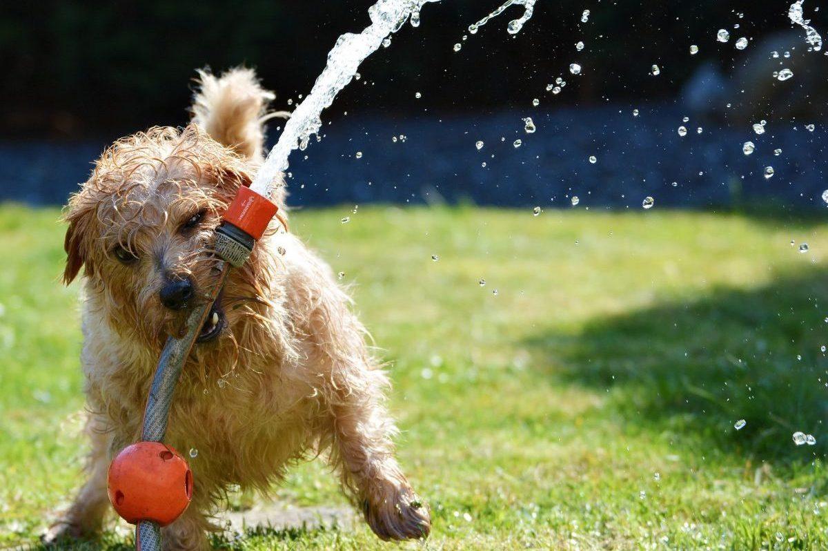 Előzzük meg a bajt, védjük meg kutyánkat a nyári melegtől!
