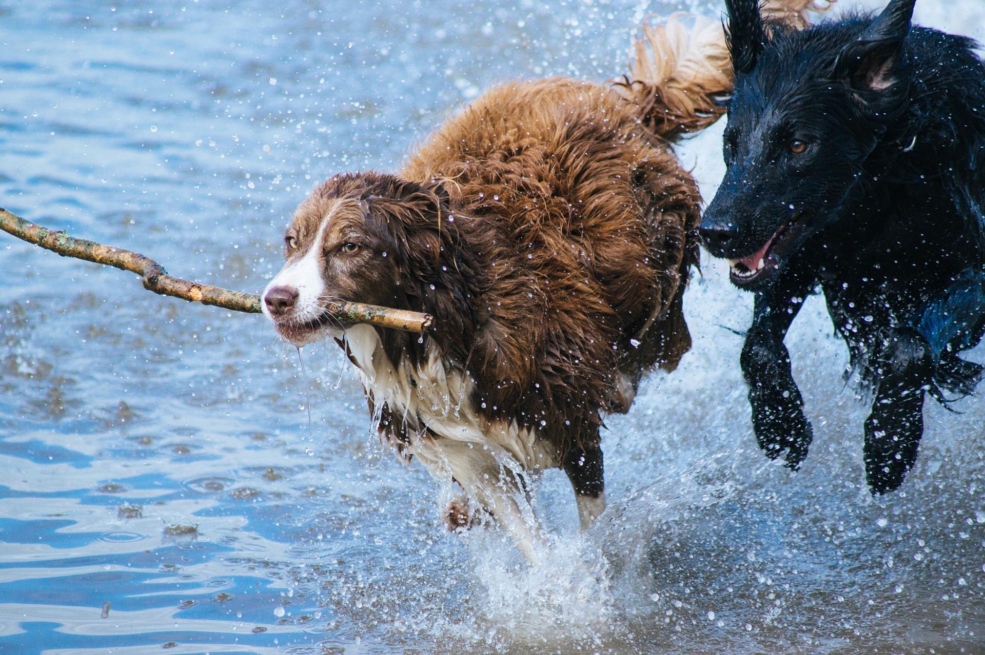 A kutyák öregedését vizsgálják az ELTE kutatói