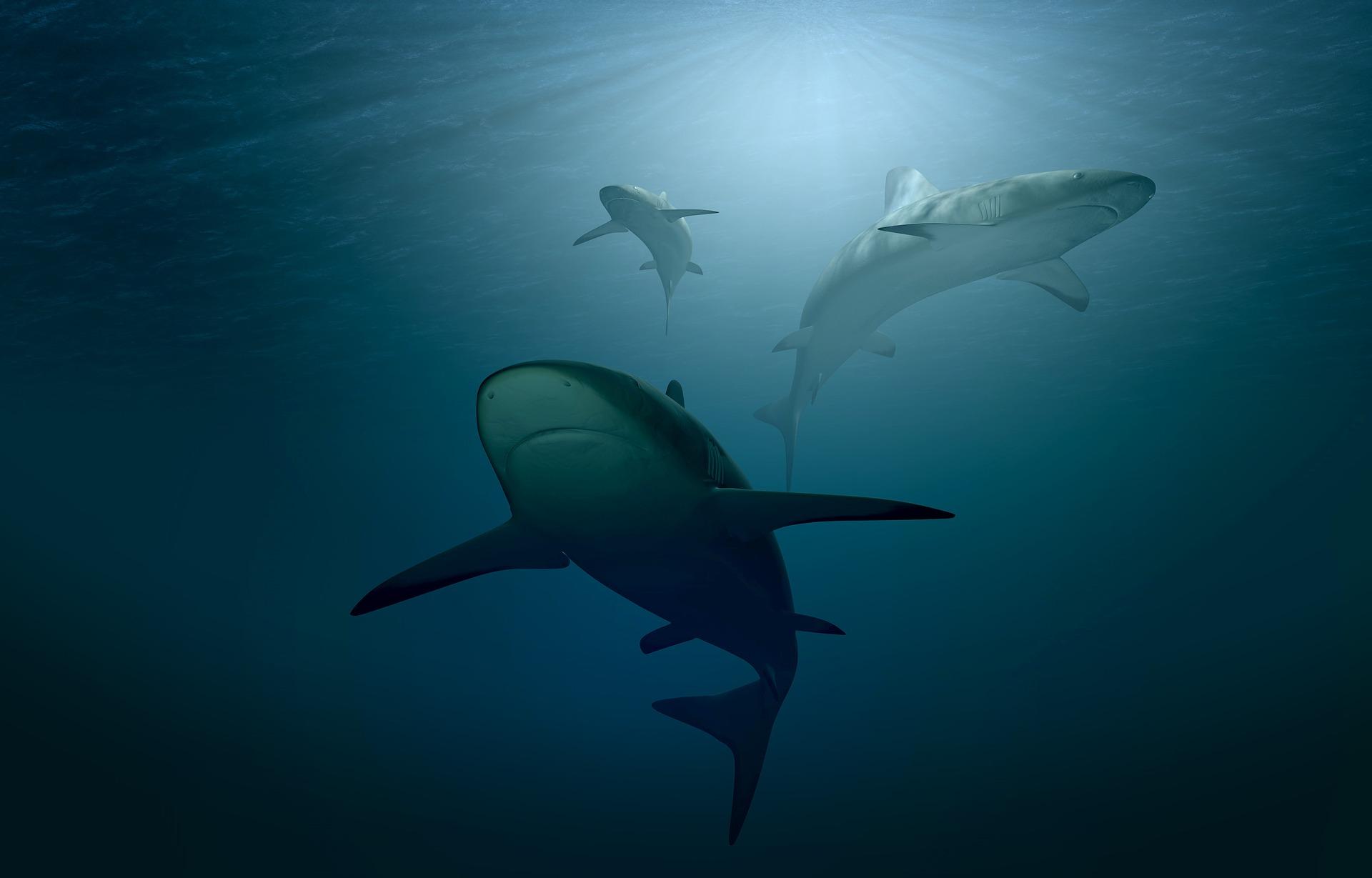 A világ első ismert mindenevő cápafaját azonosították a kutatók