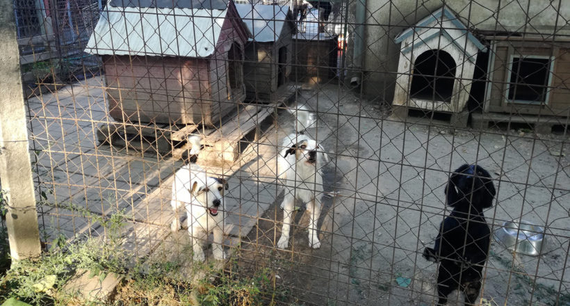 kutya, csabai állatvédők, menhely