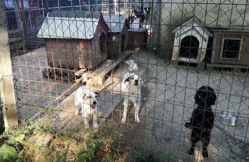 ivartalanítás, kutya, csabai állatvédők, menhely