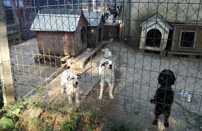 Csabai Állatvédők Khe: semmilyen tájékoztatást nem kaptunk a munkálatokról