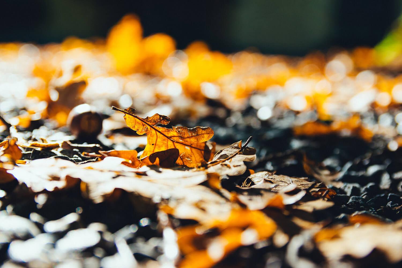 Szombati fronttal érkezik az őszi idő
