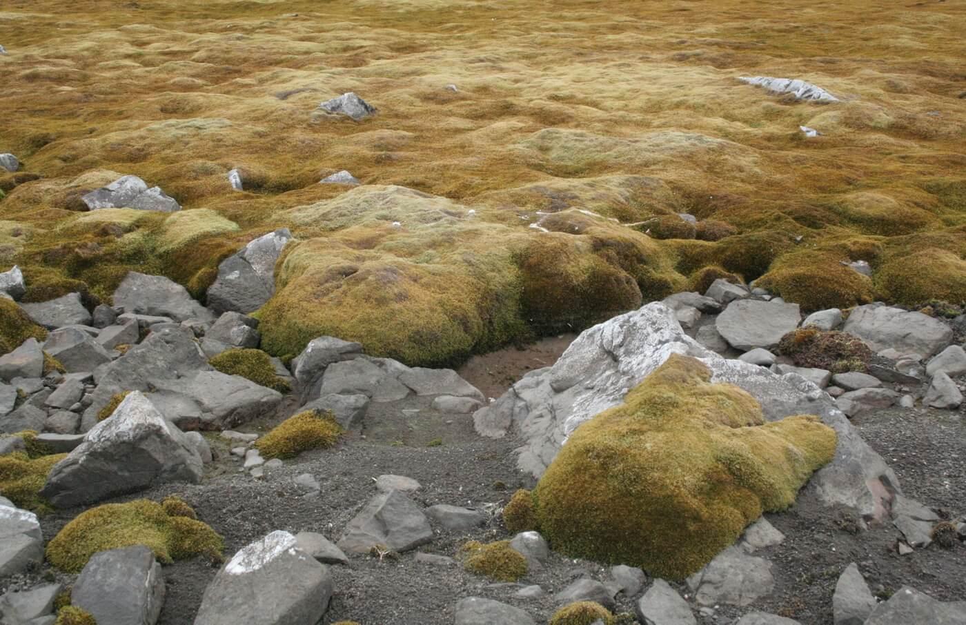 A kelet-antarktiszi mohatelepek is megsínylik az éghajlatváltozást