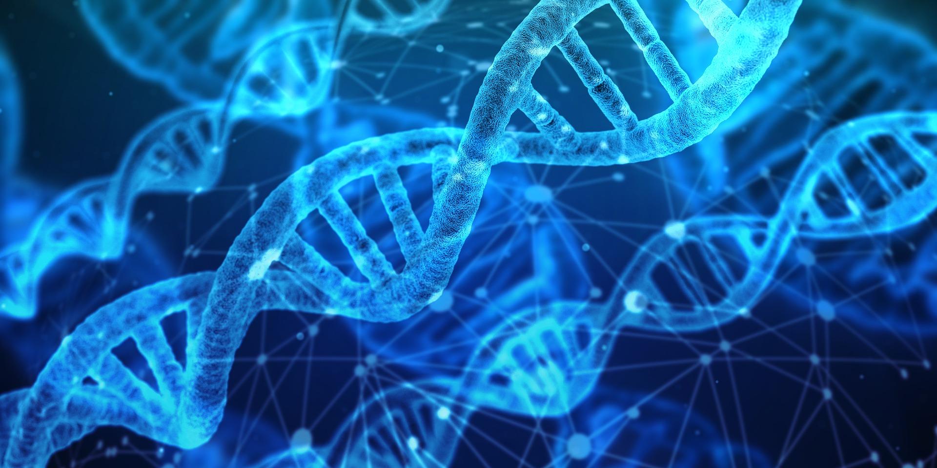 Az evolúciós folyamat a kutatók által irányított módon is végbemehet