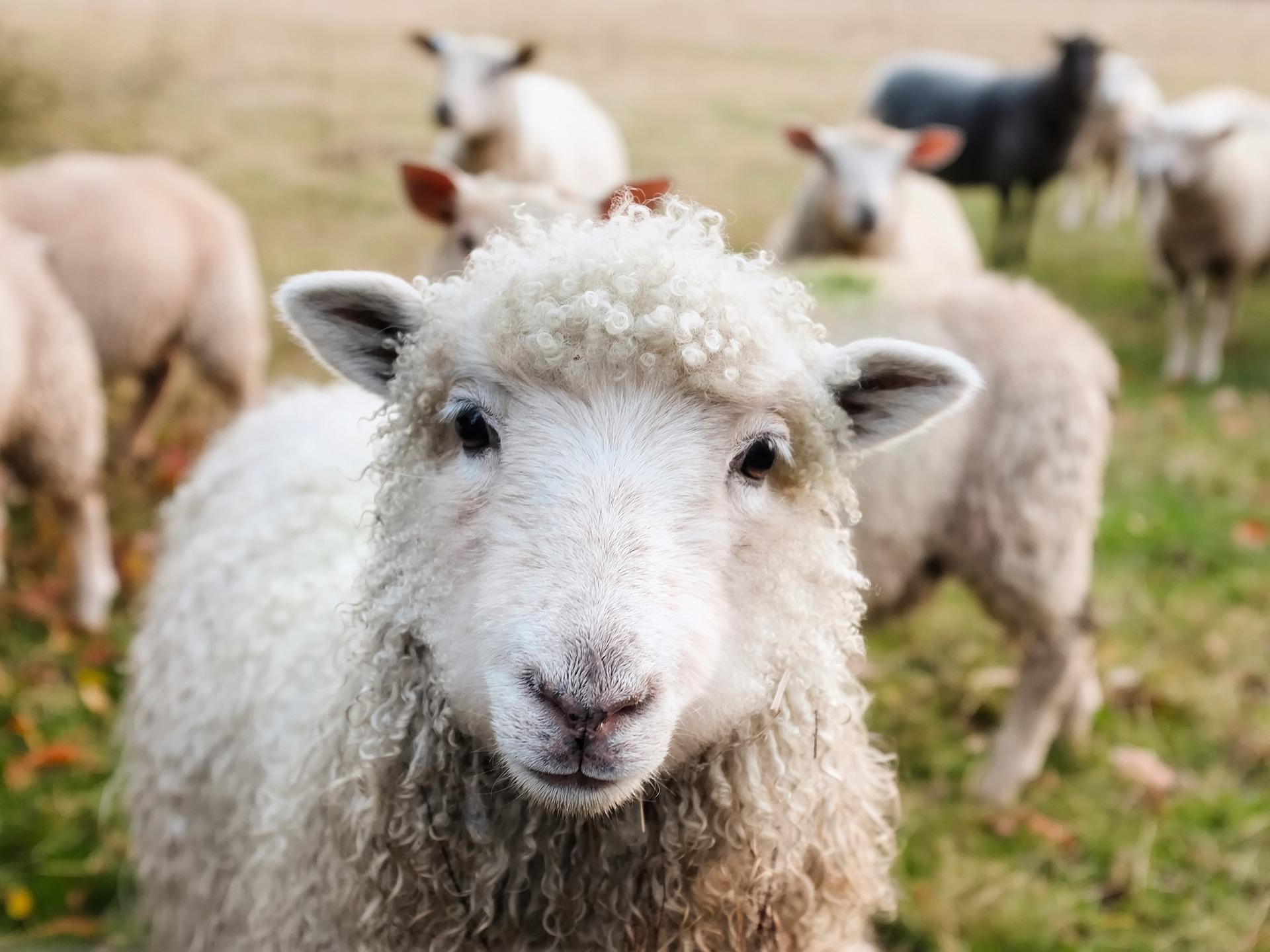 Az állatok világnapját ünnepeljük ma