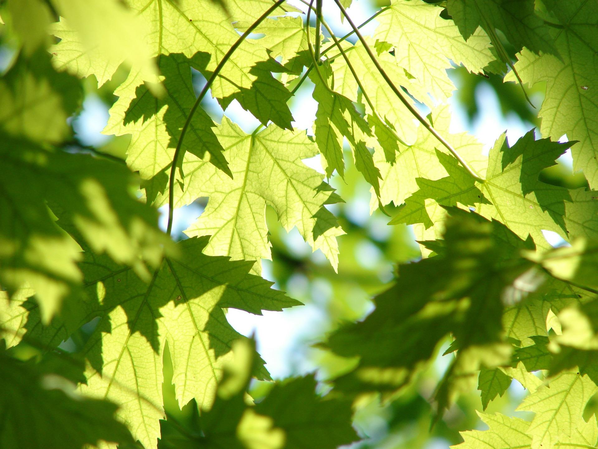 Klímaváltozás: vastagabb levelet növesztenek a növények
