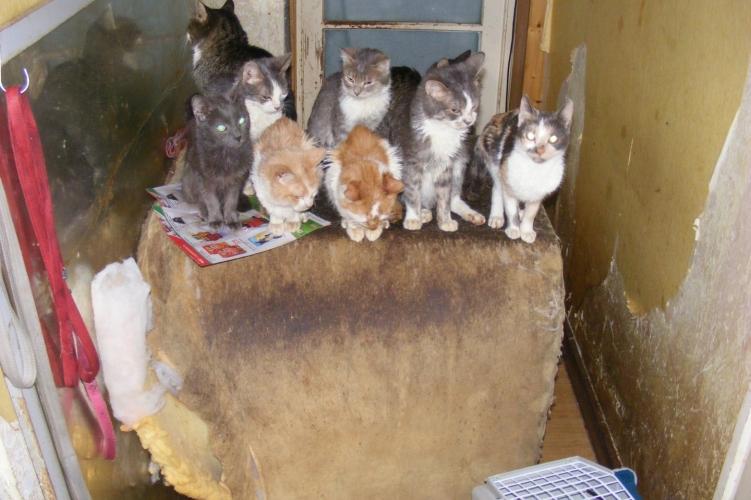 Állatkínzás miatt intézkedtek Békéscsabán