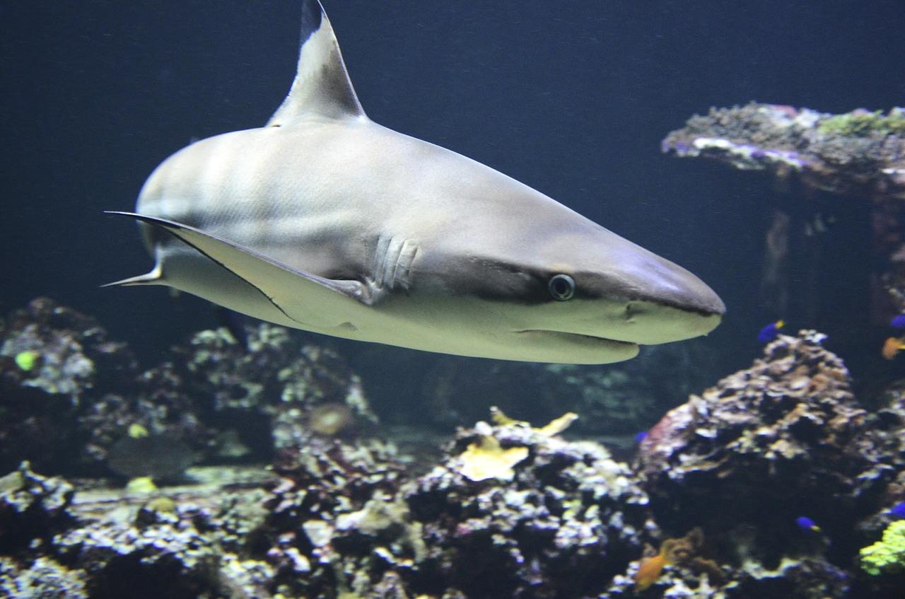 Hatalmas cápakeltetőre bukkantak az Atlanti-óceánban
