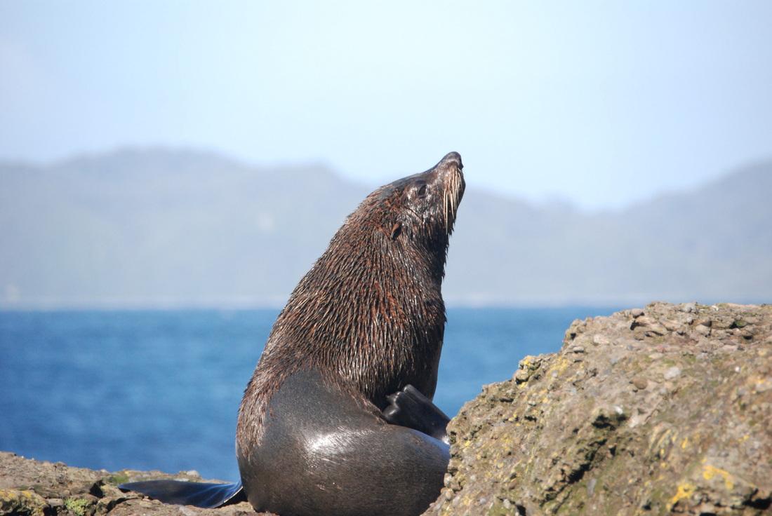 Műanyag mikroszálak voltak vadon élő állatok ürülékében