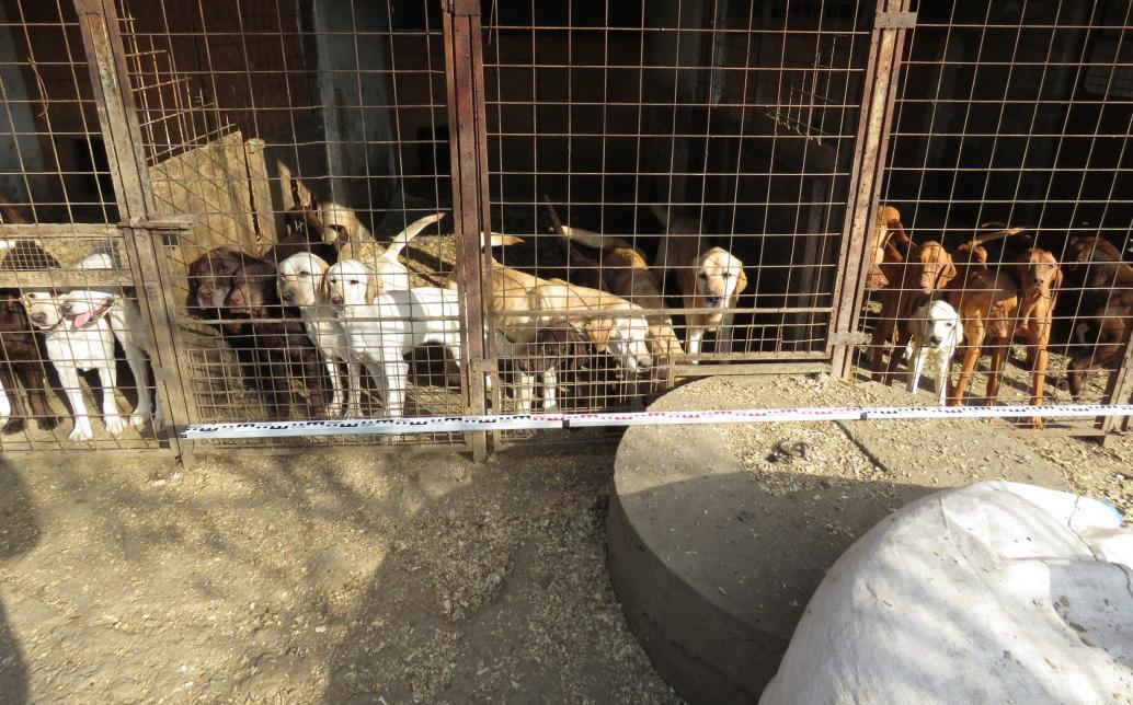 Legyengült kutyák egy Gyulai tanyán, tulajdonosukat állatkínzással gyanúsítják