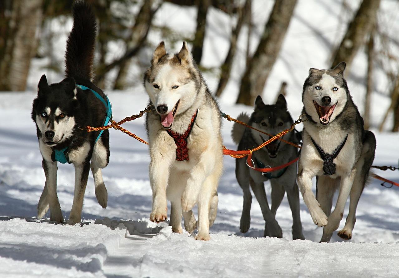 A kutya már több mint 11 ezer éve segíthetett vadászni az embernek