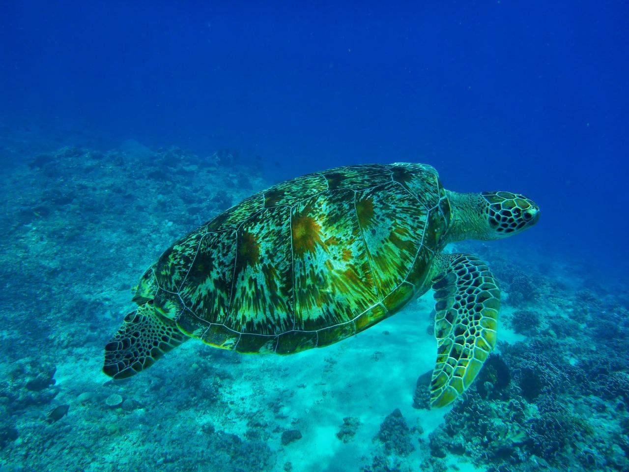 Újra emelkedik a tengeri emlősök és teknősök száma
