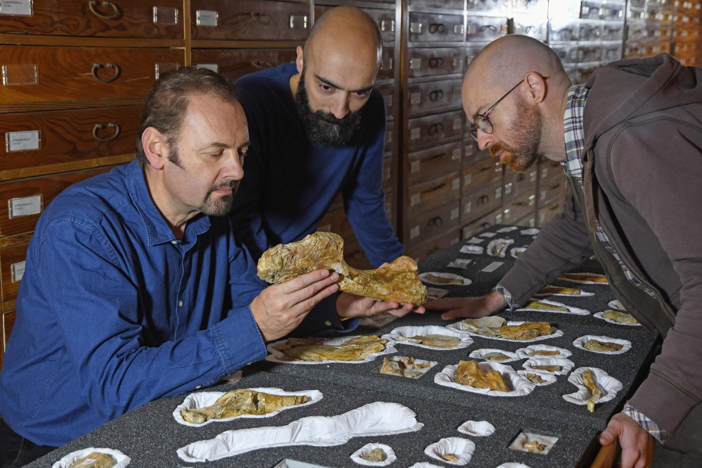 Dinoszaurusz maradványait találták meg az olasz Alpokban