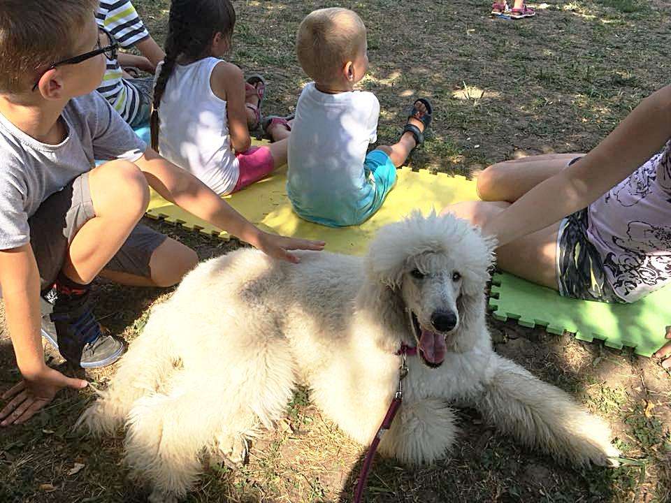 Érkezik az utánpótlás a terápiás kutyáknál