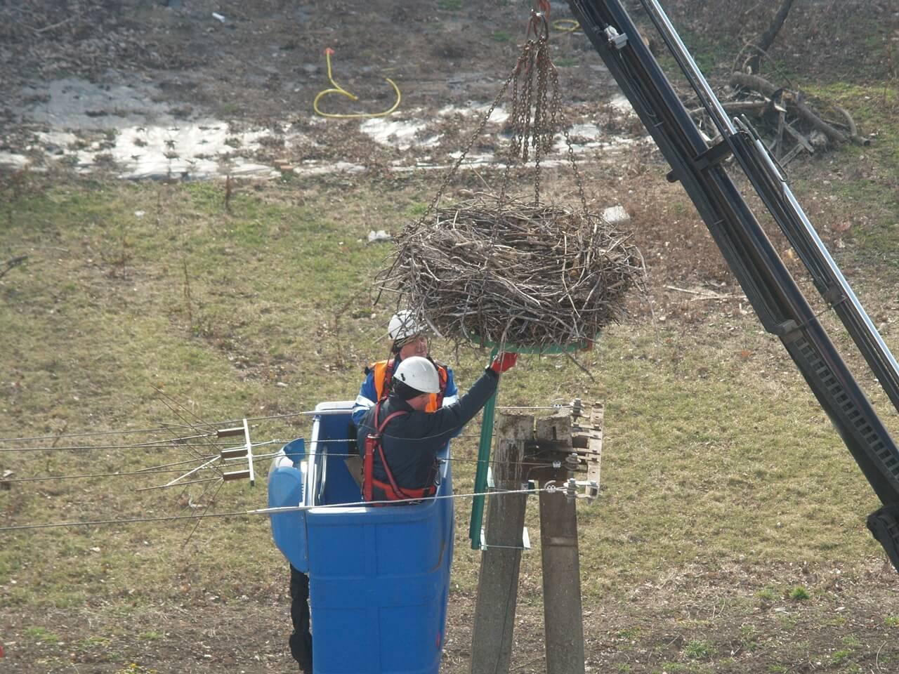 Visszatették a gólyafészket az eredeti helyére