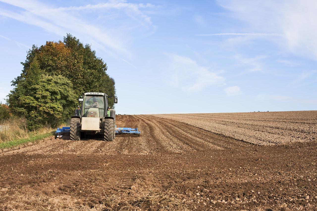 Egyre csökken az agrodiverzitás: a nagygazdaságok ugyanazokat termesztik