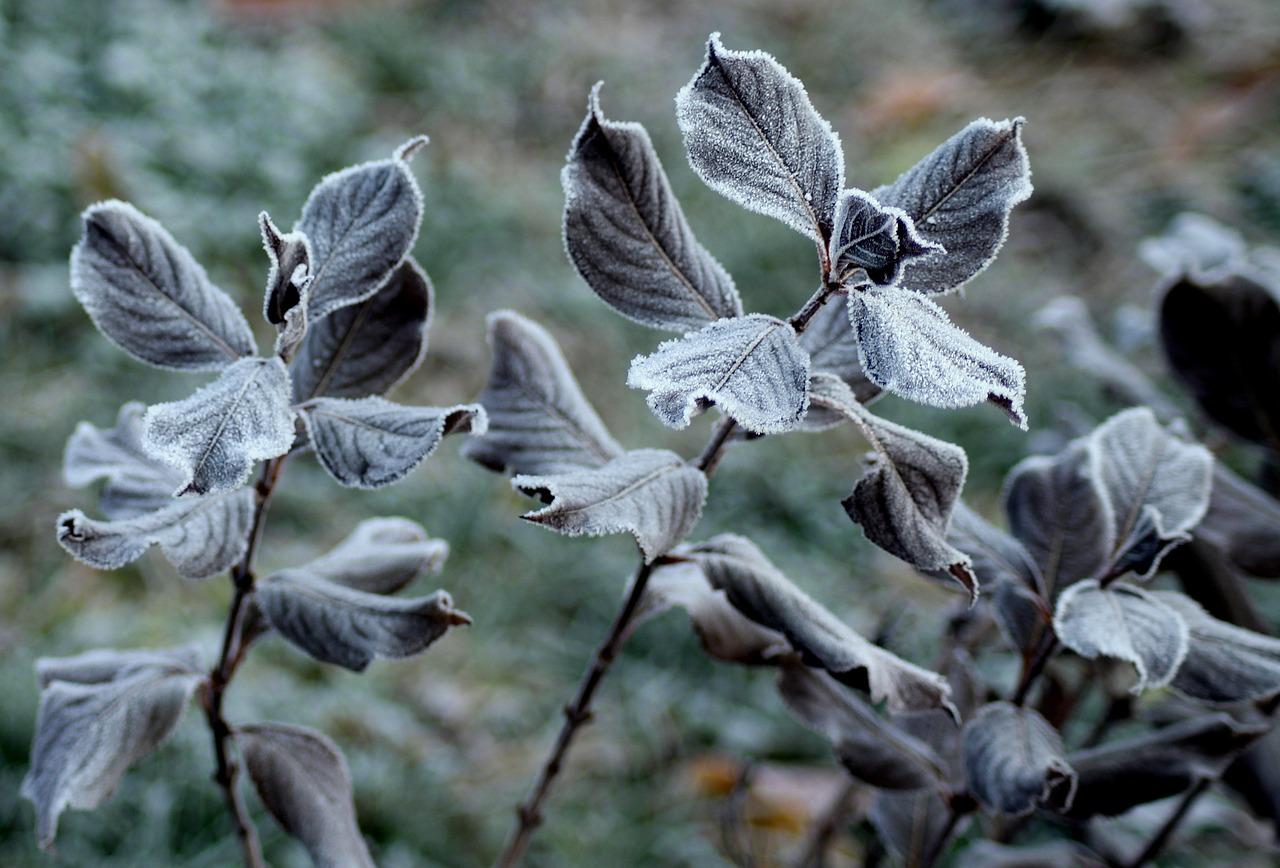 Hidegfront érkezik: hétvégére visszaköszön a tél