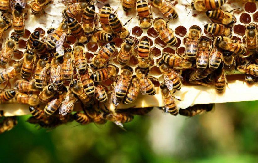 méhészeti, természetvédelmi