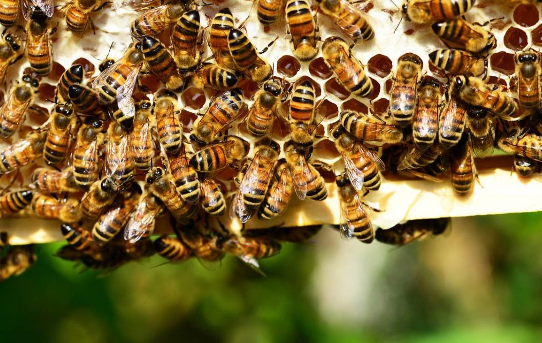 Drámai hatással jár a méhpopuláció csökkenése
