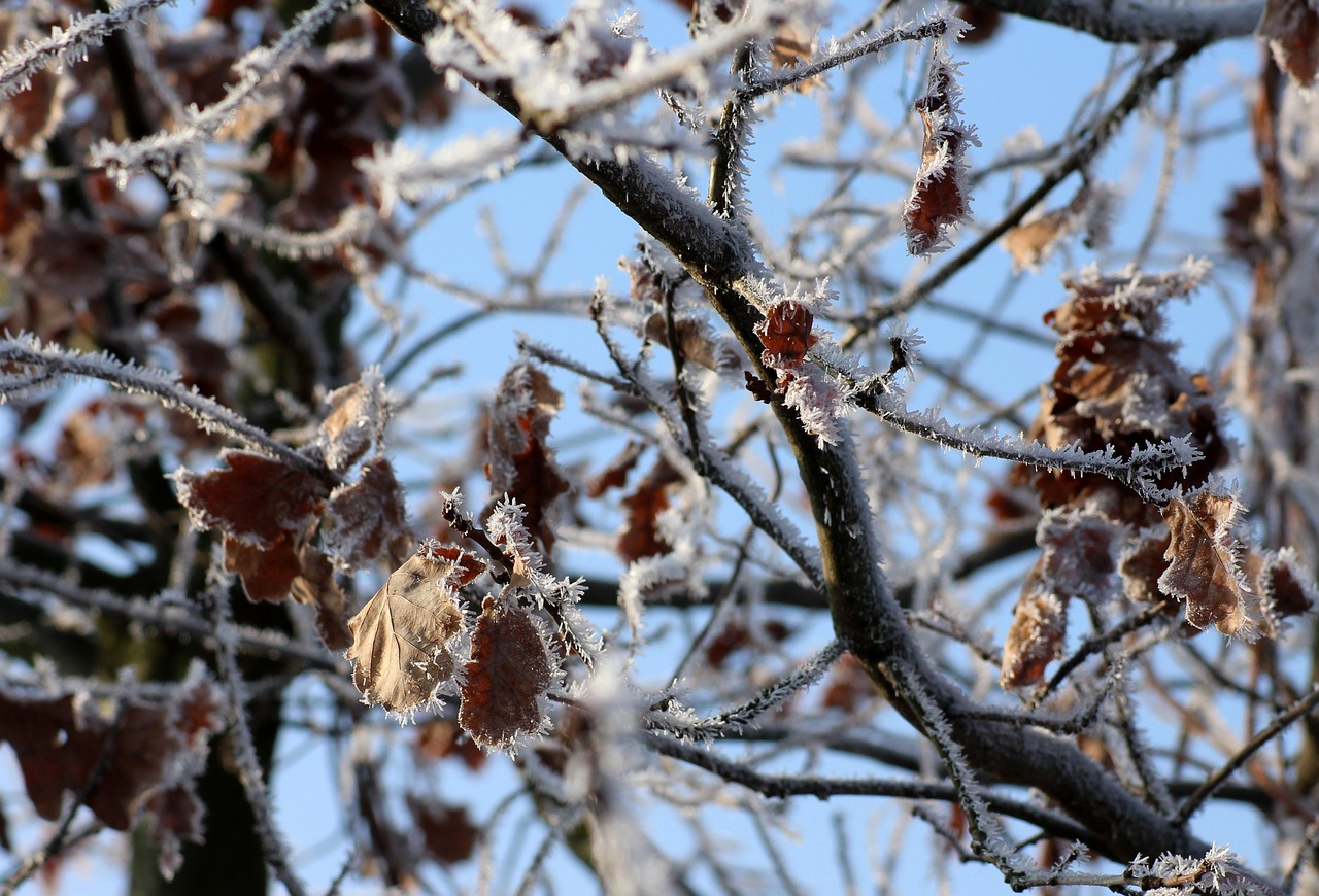 Hidegfront vet véget a februári kora tavasznak