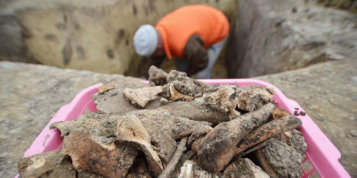 Bronzkori és szarmata leleteket is találtak a régészek Bácsbokod határában