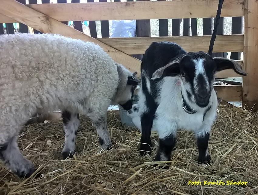 Népszerű volt a húsvét a Körösvölgyi Állatparkban
