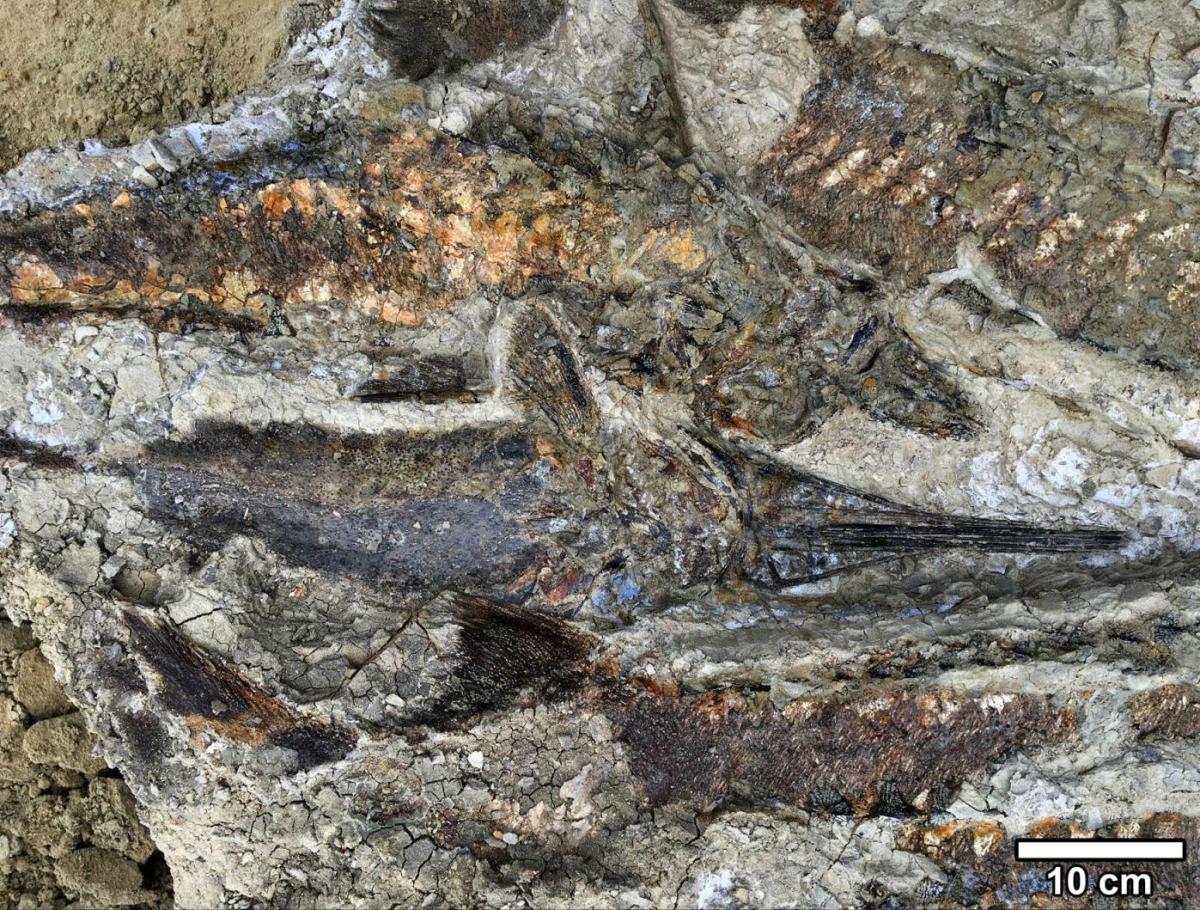 66 millió évvel ezelőtti becsapódás nyomait őrzik a kövületek