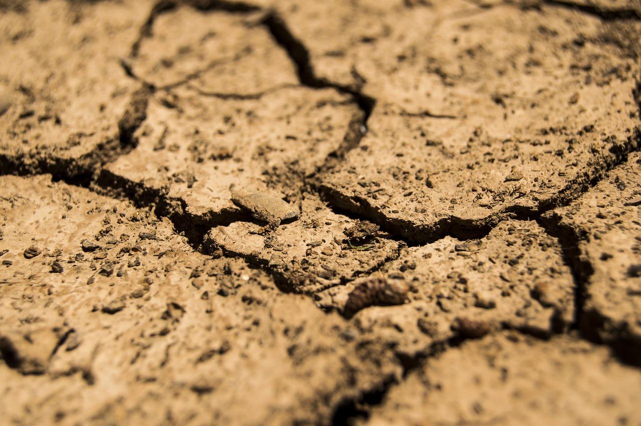 Az aszály már most sok kárt okozott a mezőgazdaságban