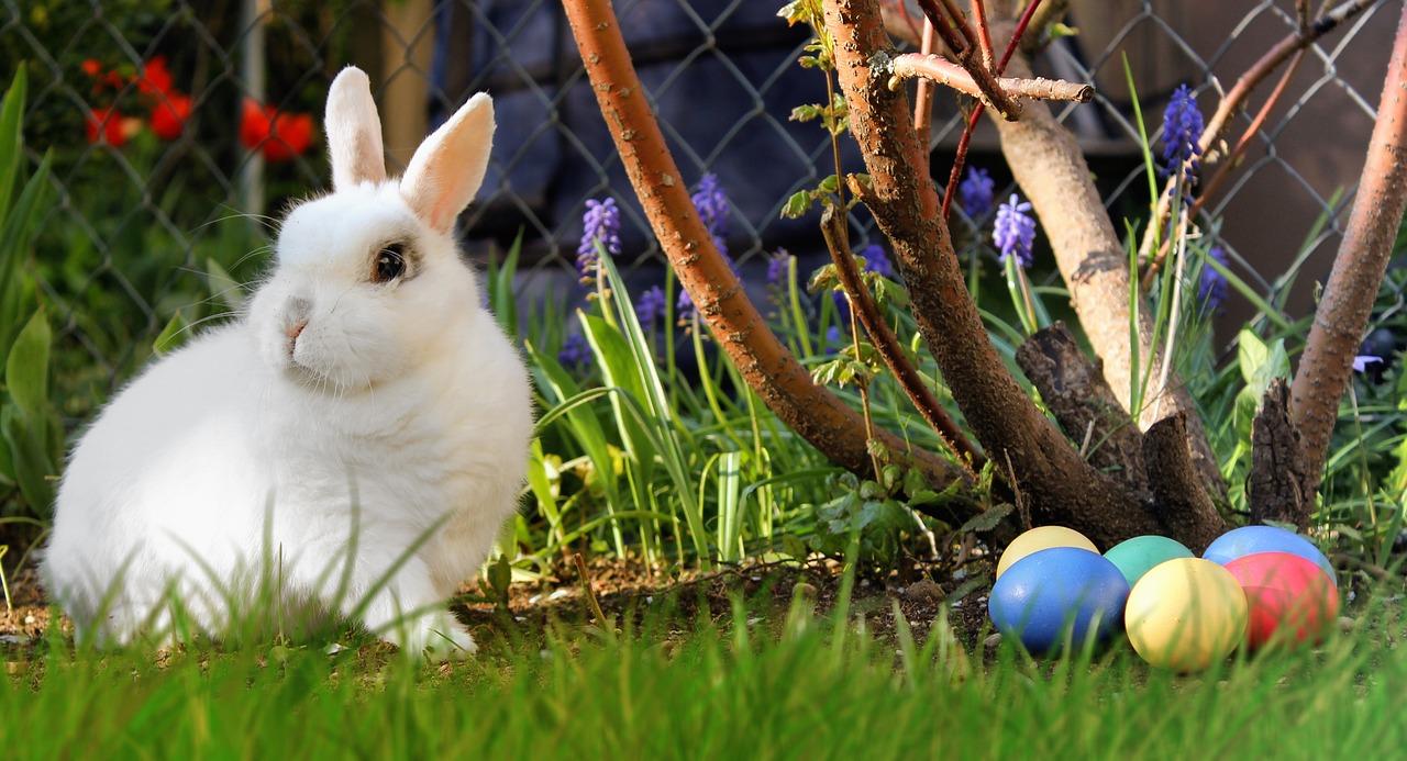 Mentők biztosították a húsvéti nyuszik baráti összecsapását (Videó)