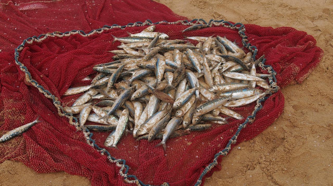 Engedély nélkül halászott és vadászott