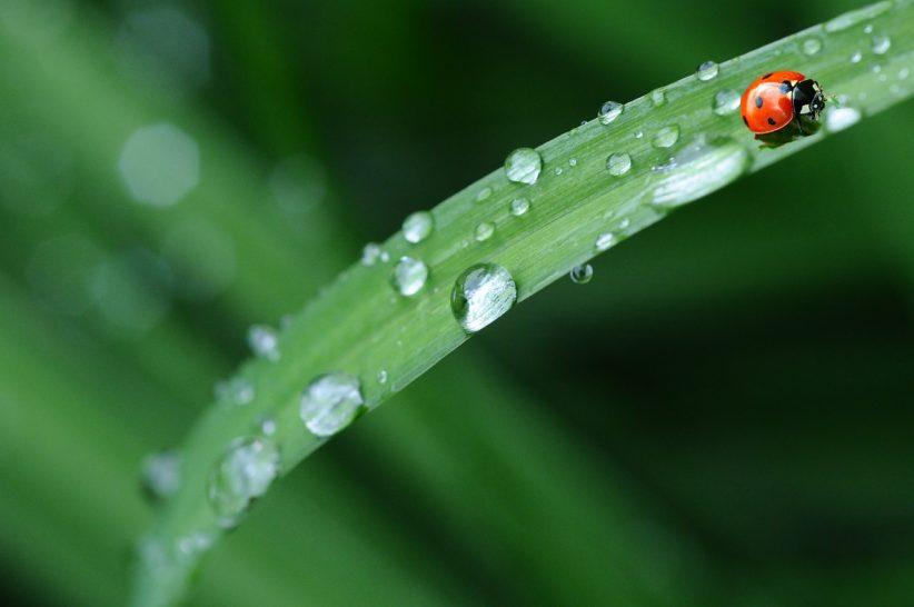 nyári esős időjárás