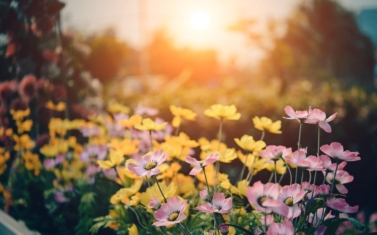 Hétvégén kerül megrendezésre a Gyulai Virágok Fesztiválja