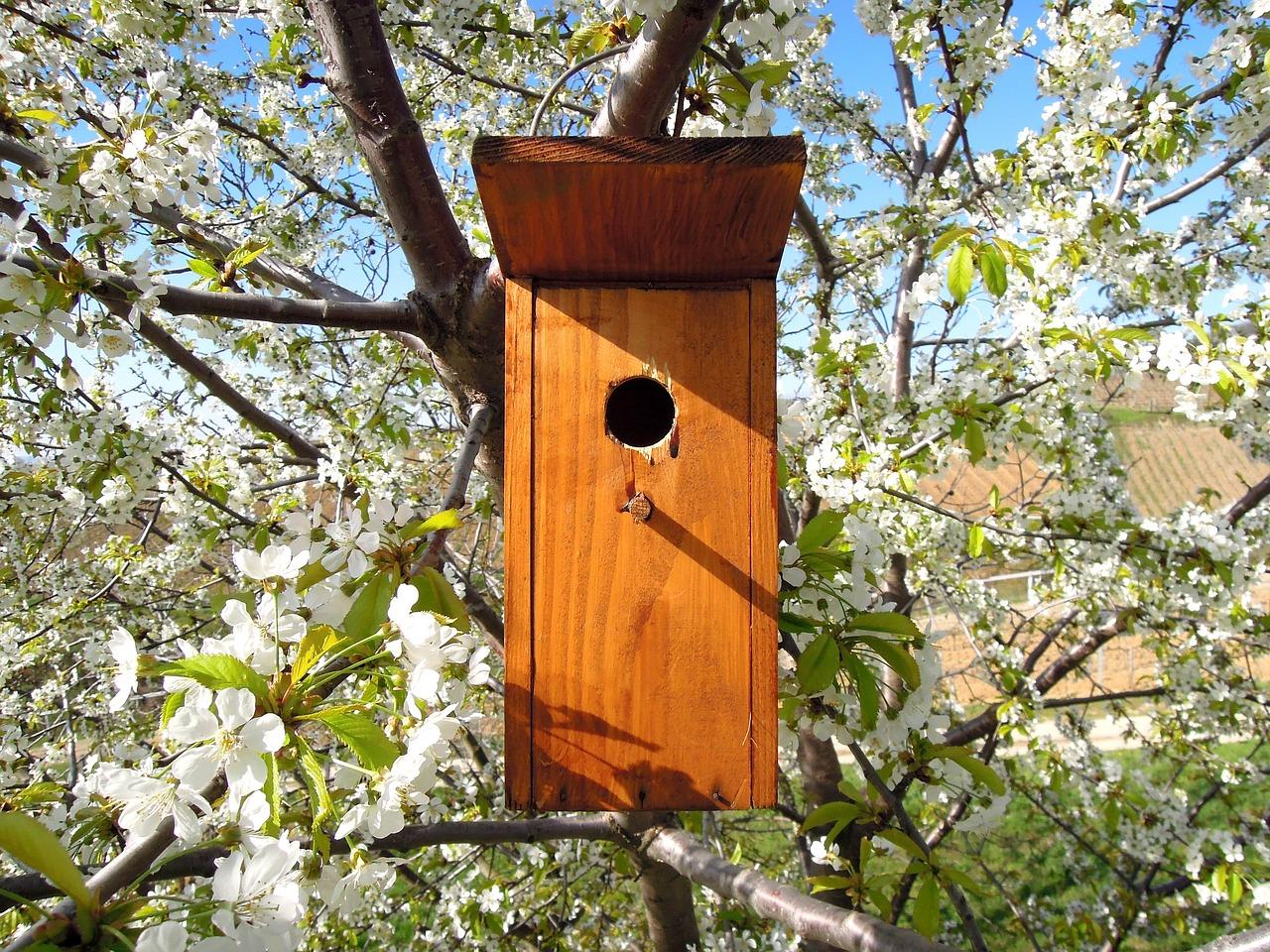 700 madárodút helyeztek ki az állami erdőkben