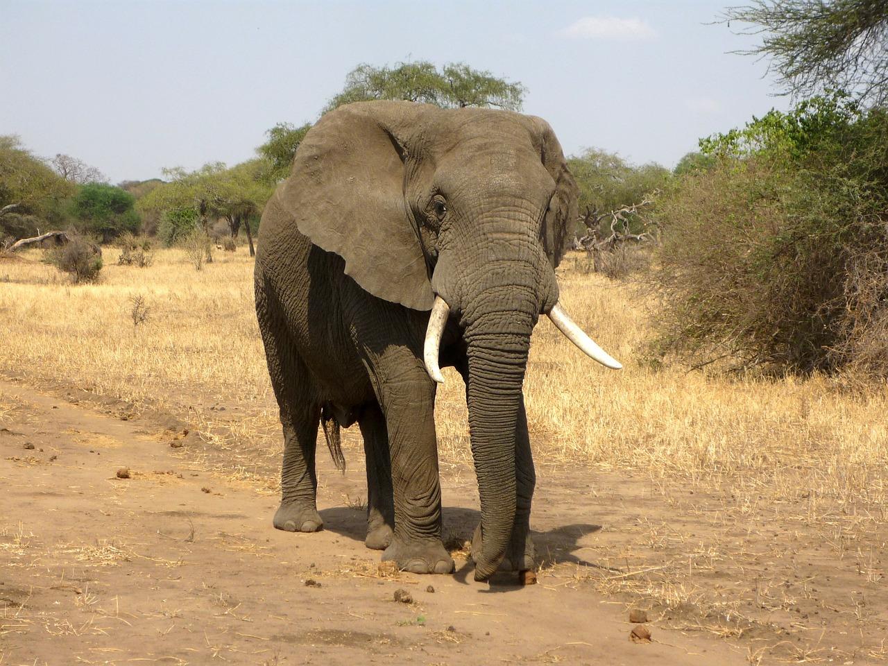 Jelentősen megnőtt Namíbia elefántpopulációja