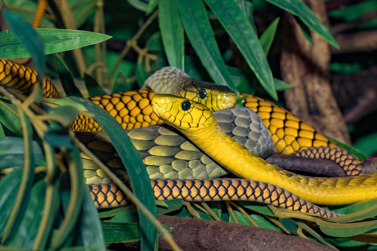 WHO: minden negyedik percben meghal egy ember kígyómarás miatt