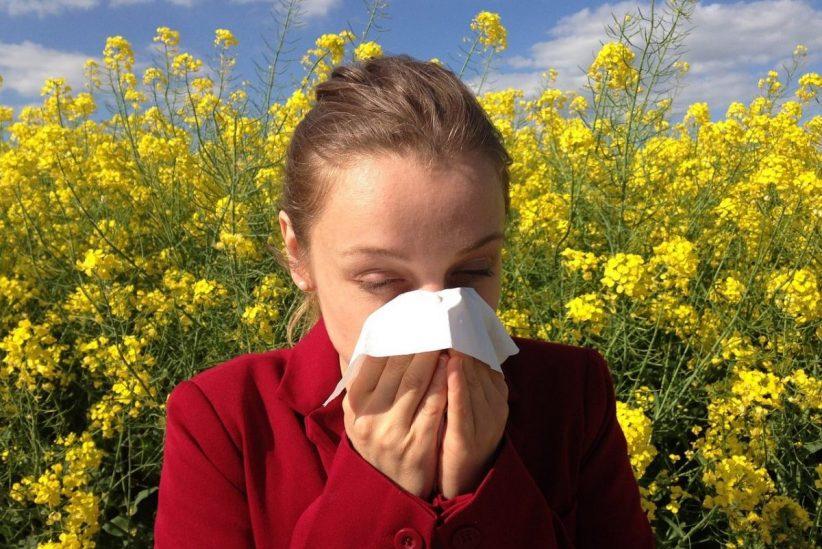 allergia, parlagfű