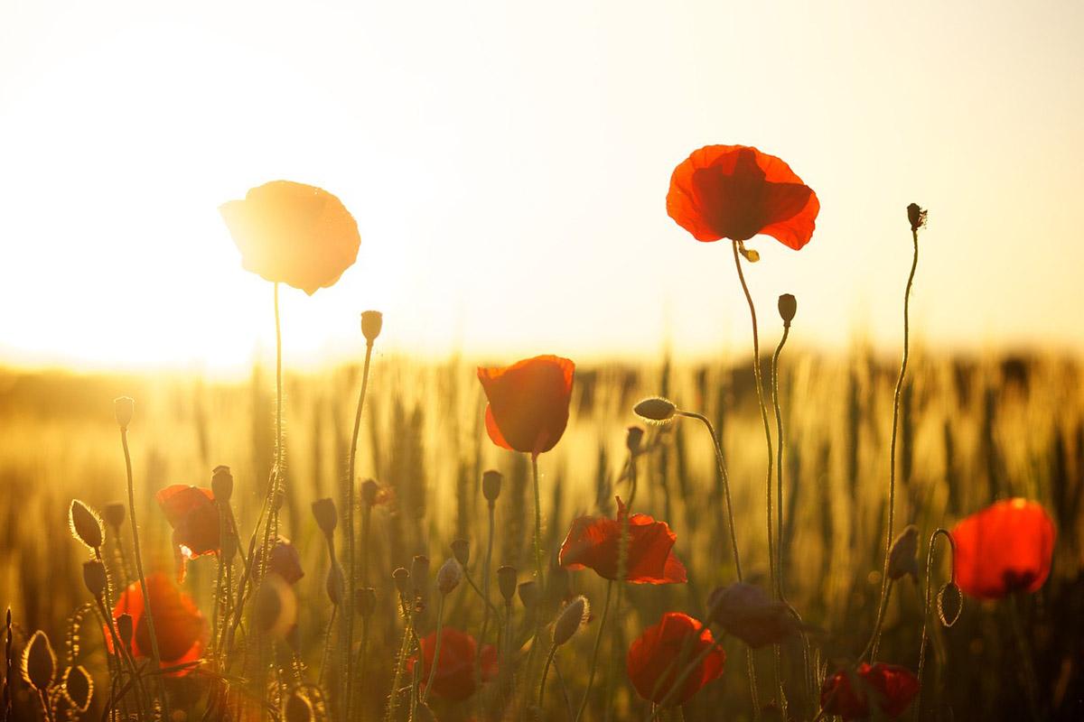 Visszatér a nyár: napsütés, kánikula várható