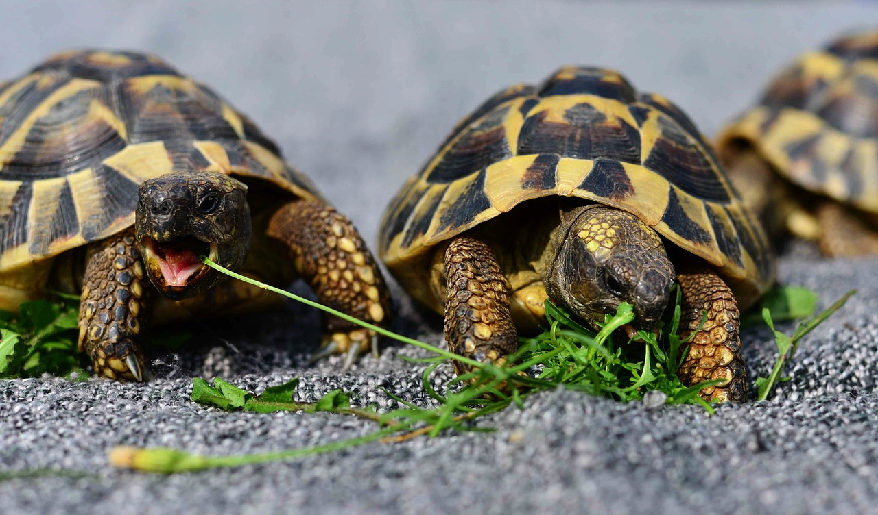 Elfogták a nőt, aki kővel vert agyon egy állatkerti teknőst