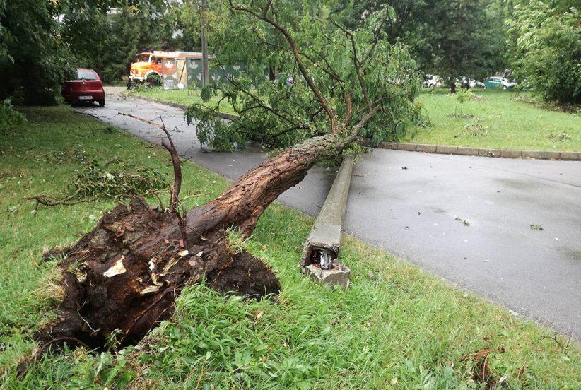 Kidőlt fák, vihar, fakidőlés, katasztrófavédelem