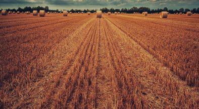 egységes, mezőgazdasági, nagy, 2021, afrikai, mezőgazdaság, őszi, kárenyhítési, kárenyhítő