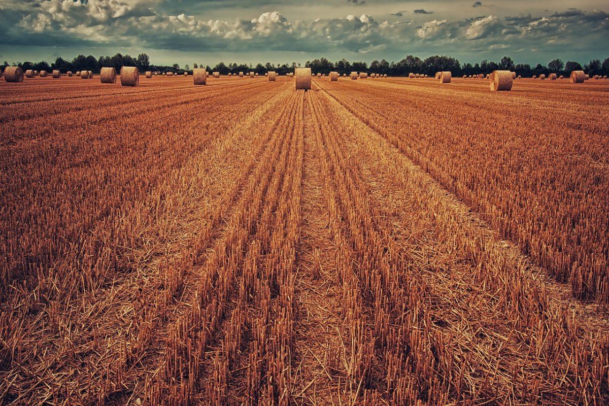 Magyar agrártechnológiákkal fejleszthető az afrikai mezőgazdaság