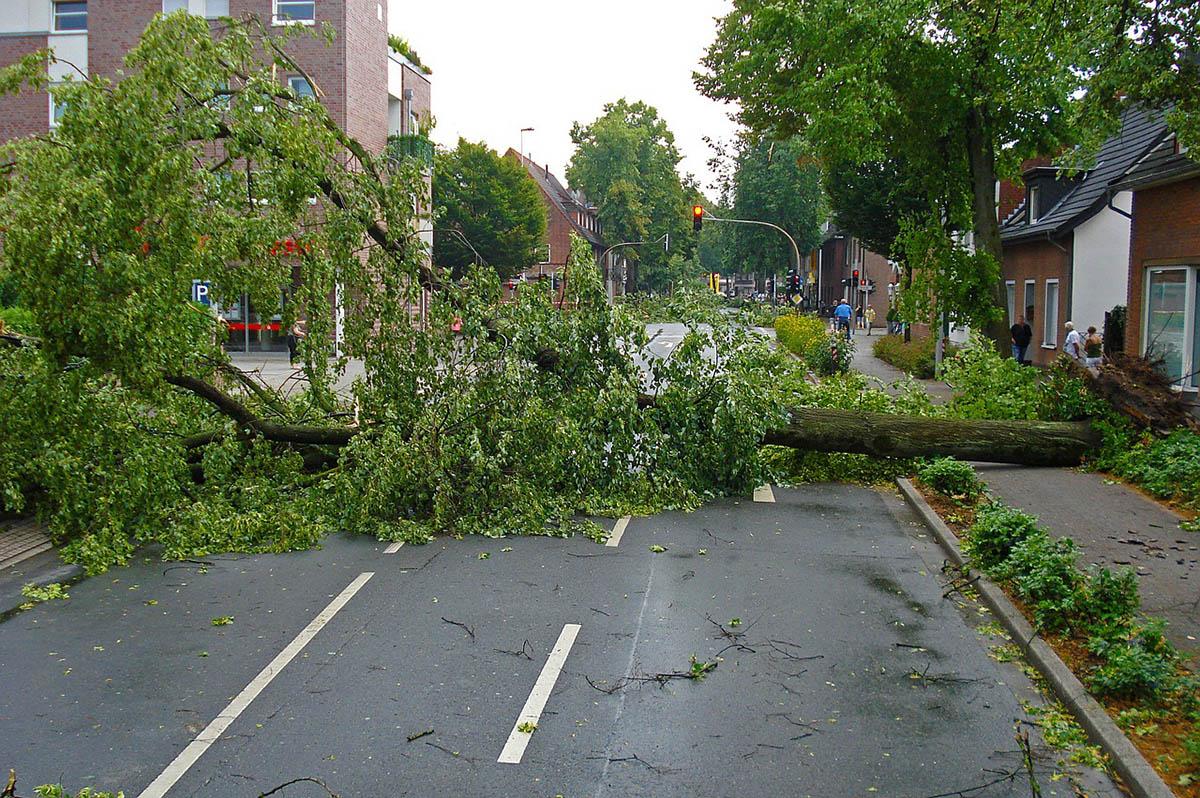 Több intézkedést is hozott a gyulai városvezetés a viharkárok enyhítésére