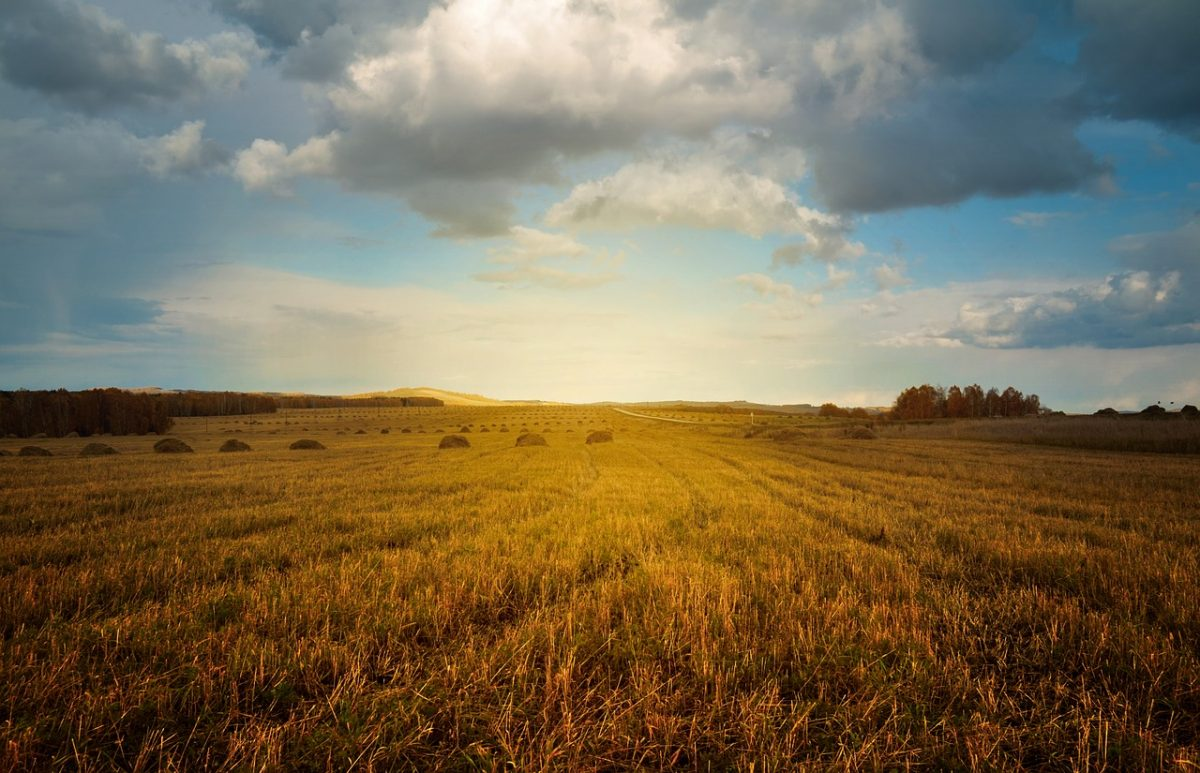 Ezt tette a júniusi hőhullám Európa mezőgazdaságával
