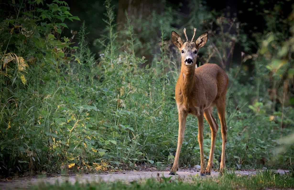 Fokozott figyelmet kér az autósoktól a vadászati védegylet