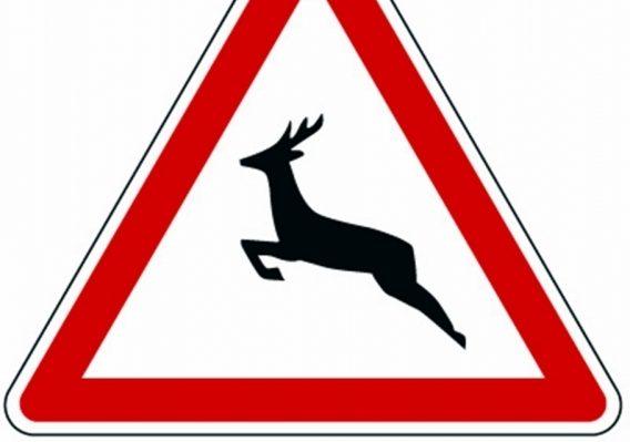 Békés megyében is figyelni kell a vadak miatt