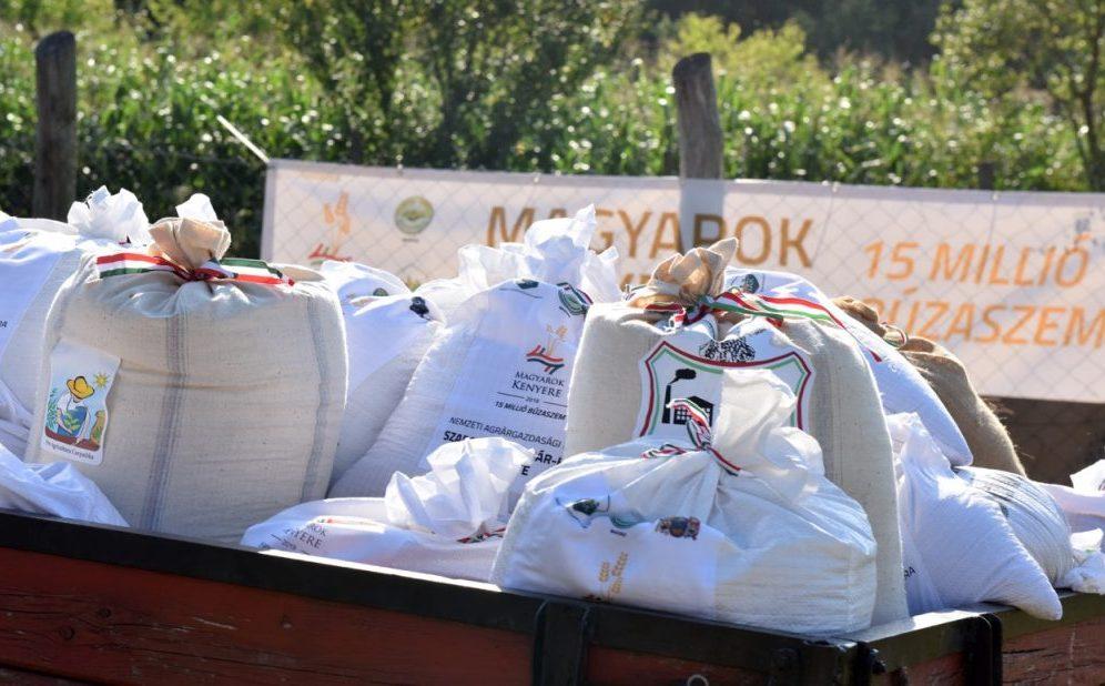 Magyarok Kenyere: összeöntötték a búzát a gazdák