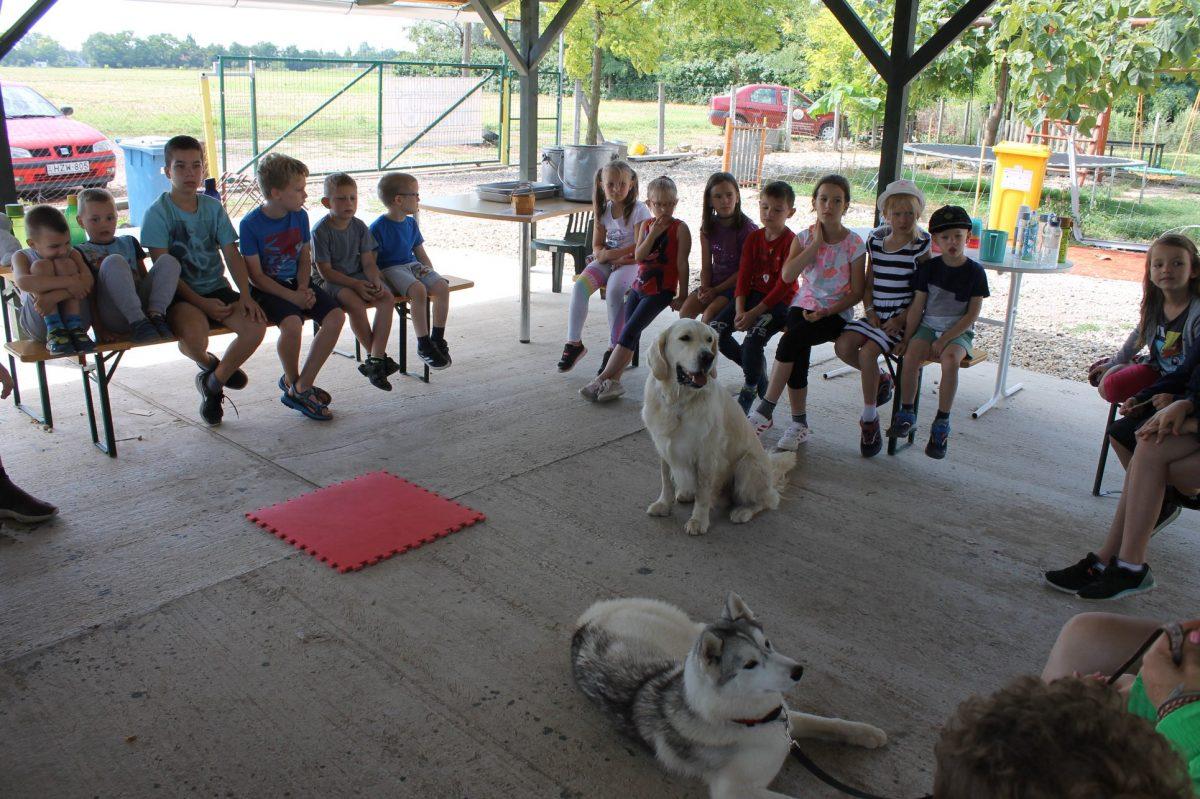 Nagy érdeklődéssel zajlottak idén is a Dogland Alapítvány táborai
